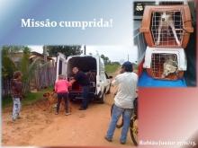 Nosso parceiro Prevencão buscando animais em Rubião Junior para castração.
