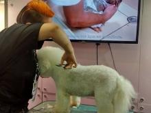 Trabalhando na Pet south América