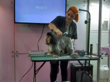 Wahl - Pet South América 2015