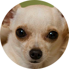 Estética animal (especialização)